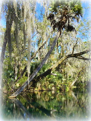 Photograph - Silver River Palm by Sheri McLeroy