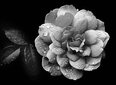 Rain Digital Art - Rose Rain by Jessica Jenney