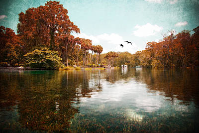 Photograph - Silver Springs by Beverly Stapleton