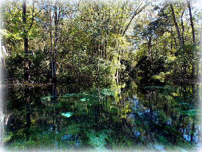 Photograph - Silver Springs Run 1 by Sheri McLeroy