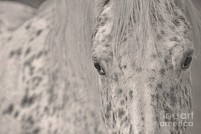 Photograph - Silver Steed by Joshua McCullough