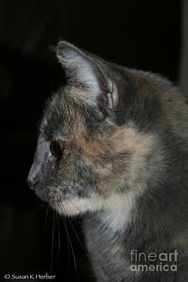 Photograph - Silver Torti by Susan Herber