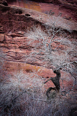 Photograph - Silver Tree And Red Rocks by Karen Saunders