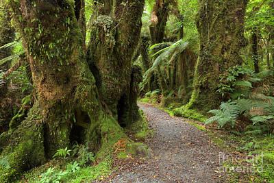 Tree Fern Photograph - Silver Tree Ferns Rainforest South by Yva Momatiuk and John Eastcott