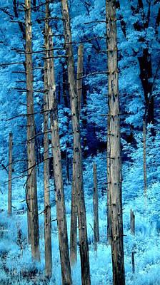 Silver Trees Print by Luke Moore