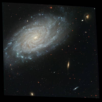 Photograph - Silverado Galaxy, Ngc 3370, Ugc 5887 by Science Source