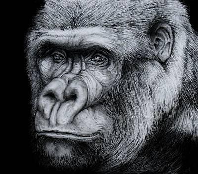 Silverback - A Drawing Art Print