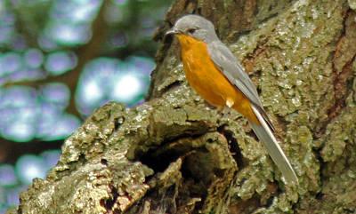 Photograph - Silverbird by Tony Murtagh