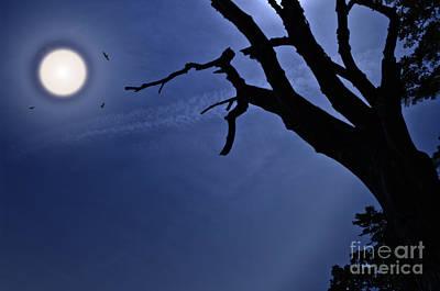 Silvery Moon Art Print