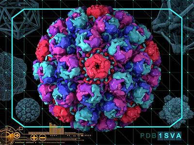 Simian Virus 40 Art Print by Laguna Design/science Photo Library