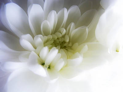 Photograph - White Gerbera by Nina Ficur Feenan
