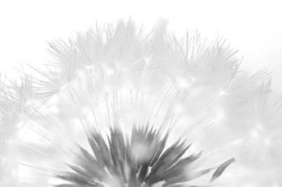 Dandelion Photograph - Simple Beauty by Julie Wynn