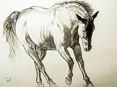 Charcoal Horse Drawing - Simple Elegance by Tracey Beer