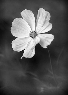 Photograph - Simple Flower by Patrick M Lynch