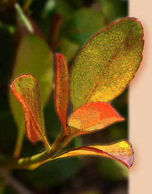 Photograph - Simple Leaf Card Shell by Herb Paynter