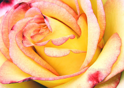Photograph - Simple Rose by Kristy Jeppson