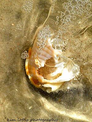 simple Shell  Art Print by Kim Loftis