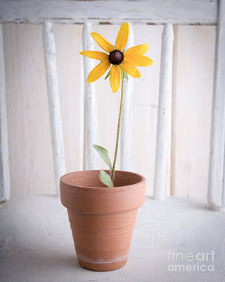 Black-eyed Susan Photograph - Simple Yellow Flower by Edward Fielding