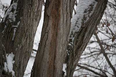 Photograph - Simplicity In Winter by Stacie  Goodloe