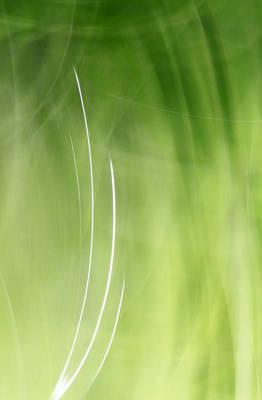 Photograph - Simplicity by Munir Alawi