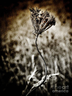 Photograph - Simplistic Beauty by Karen Lewis