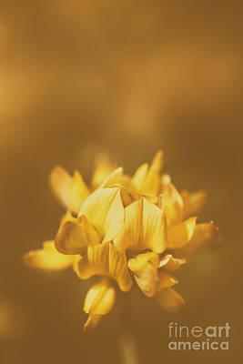 Photograph - Simplistic Yellow Clover Flower  by Jorgo Photography - Wall Art Gallery