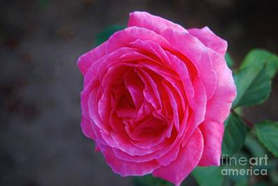 Simply A Rose Art Print by Angela J Wright