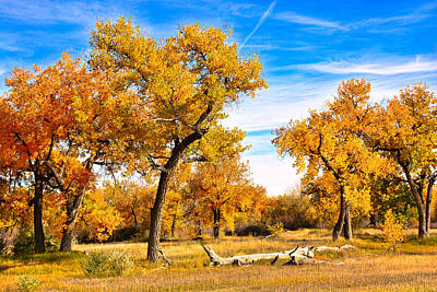 Photograph - Simply Autumn by Robert Meyers-Lussier