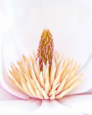 Photograph - Simply Magnolia by Sarah-fiona  Helme