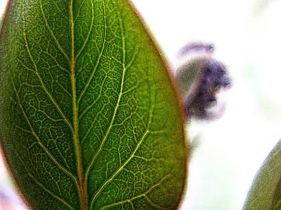 Photograph - Simply Nature 11 by Rhonda Barrett