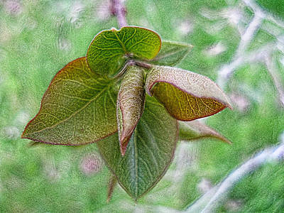 Photograph - Simply Nature 2 by Rhonda Barrett