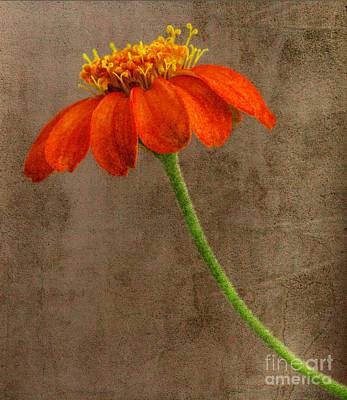 Simply Orange Art Print