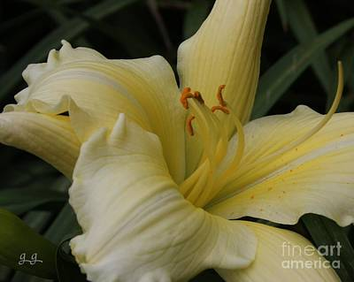Photograph - Simply Sincere by Geri Glavis