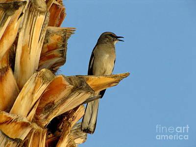 Marilyn Photograph - Singing Mockingbird by Marilyn Smith