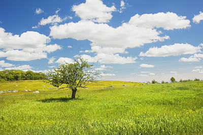 Photograph - Single Apple Tree In Maine Blueberry Field by Keith Webber Jr