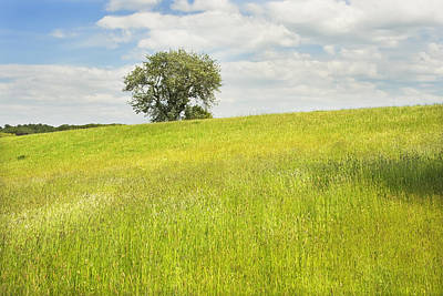 Photograph - Single Apple Tree In Maine Hay Field by Keith Webber Jr