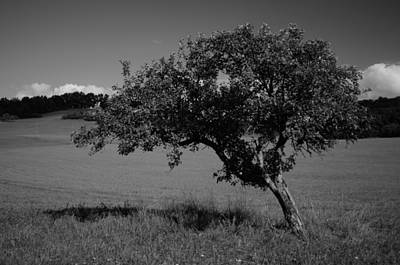 Photograph - Single Apple Tree by Miguel Winterpacht