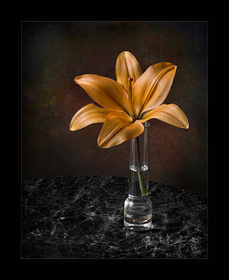 Photograph - Single Asiatic Lily In Vase by Endre Balogh