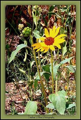 Photograph - Single Bloom by Bobbee Rickard