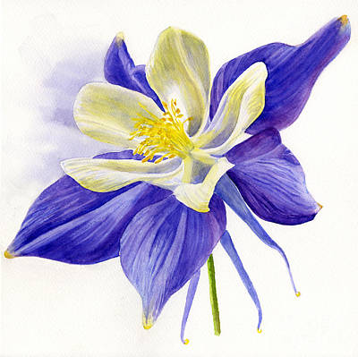 Single Blue Columbine Original