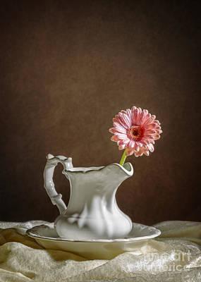 Gerbera Photograph - Single Gerbera Flower by Amanda Elwell