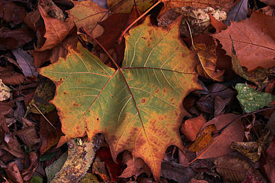 Becky Falls Photograph - Single Leaf by Becky Lodes