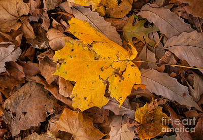 Photograph - Single Leaf by Denise Ellis