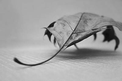 Photograph - Single Leave In Black And White 2 by Kelly Hazel