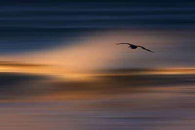 Photograph - Single Pelican  73a1102 by David Orias
