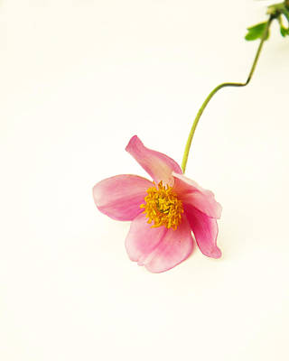 Mom Photograph - Single Pink Blossom by Brooke T Ryan
