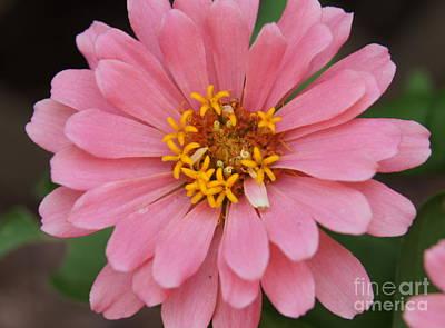 Photograph - Single Pink Flower by Megan Cohen