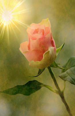 Painting - Single Pink Rose by Dennis Buckman