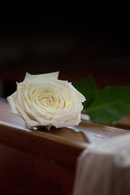 Photograph - Single Rose by Carole Hinding