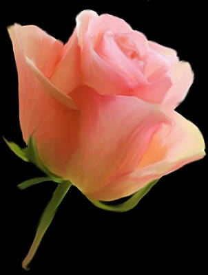 Digital Art - Single Rose by Dennis Buckman